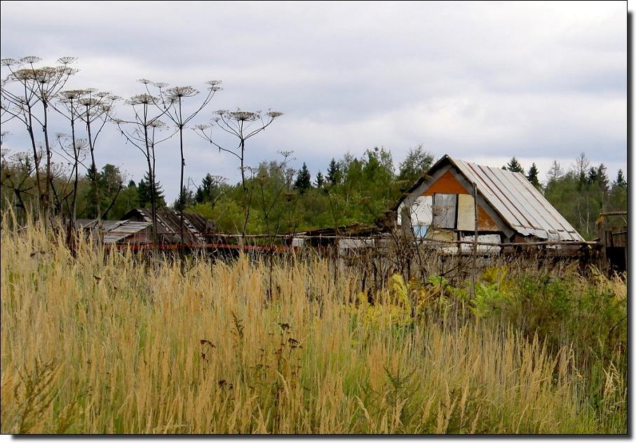 "фото ""Задворки  осени..."" метки: пейзаж, жанр, осень"