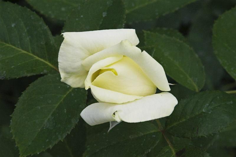 """фото """"Цветочная 94."""" метки: природа, цветы"""