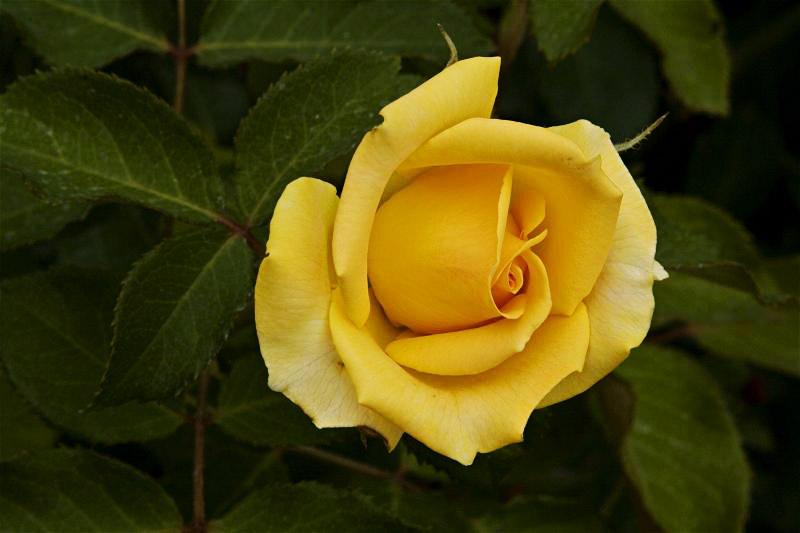 """фото """"Цветочная 95."""" метки: природа, цветы"""