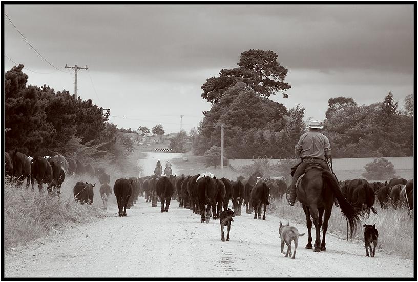 """фото """"Cowboys"""" метки: разное, путешествия,"""