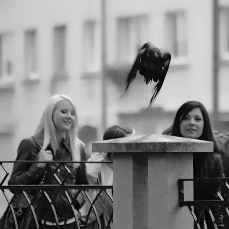 """фото """"Птичка вылетела"""" метки: жанр, черно-белые,"""