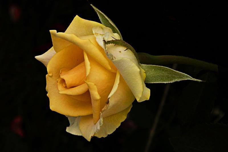 """фото """"Цветочная 96."""" метки: природа, цветы"""