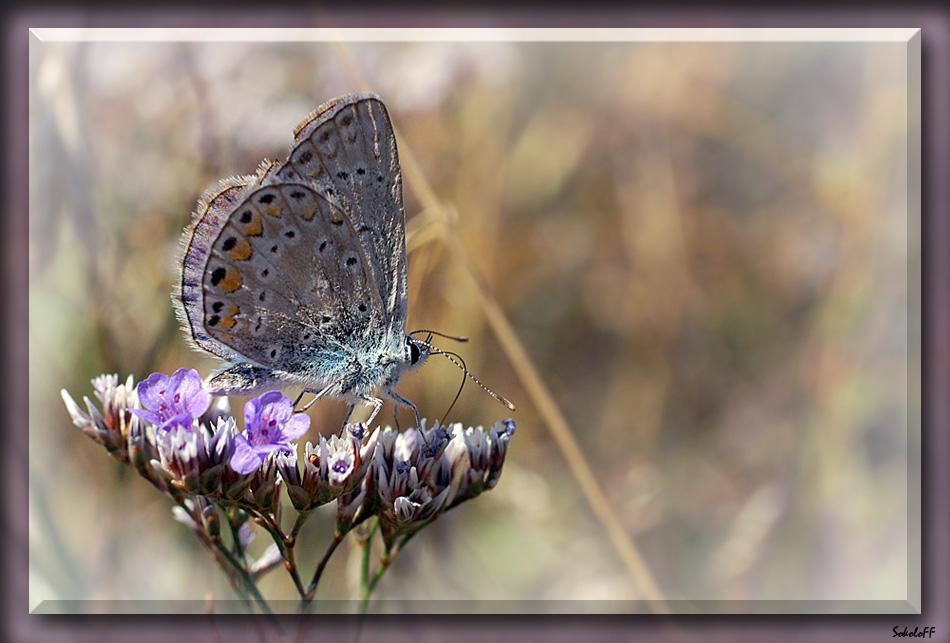 """фото """"Взлетная площадка"""" метки: макро и крупный план, природа, насекомое"""