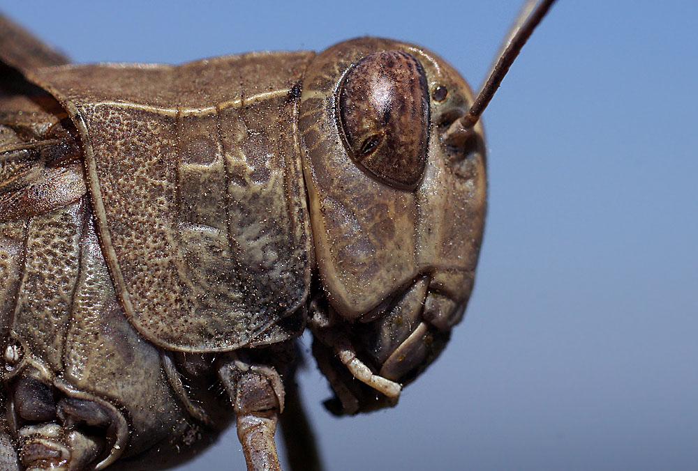 """фото """"В доспехах"""" метки: макро и крупный план, природа, насекомое"""