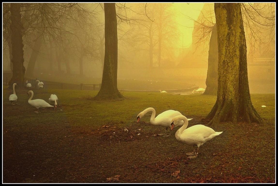 "фото ""Misty summer morning."" метки: пейзаж, закат"