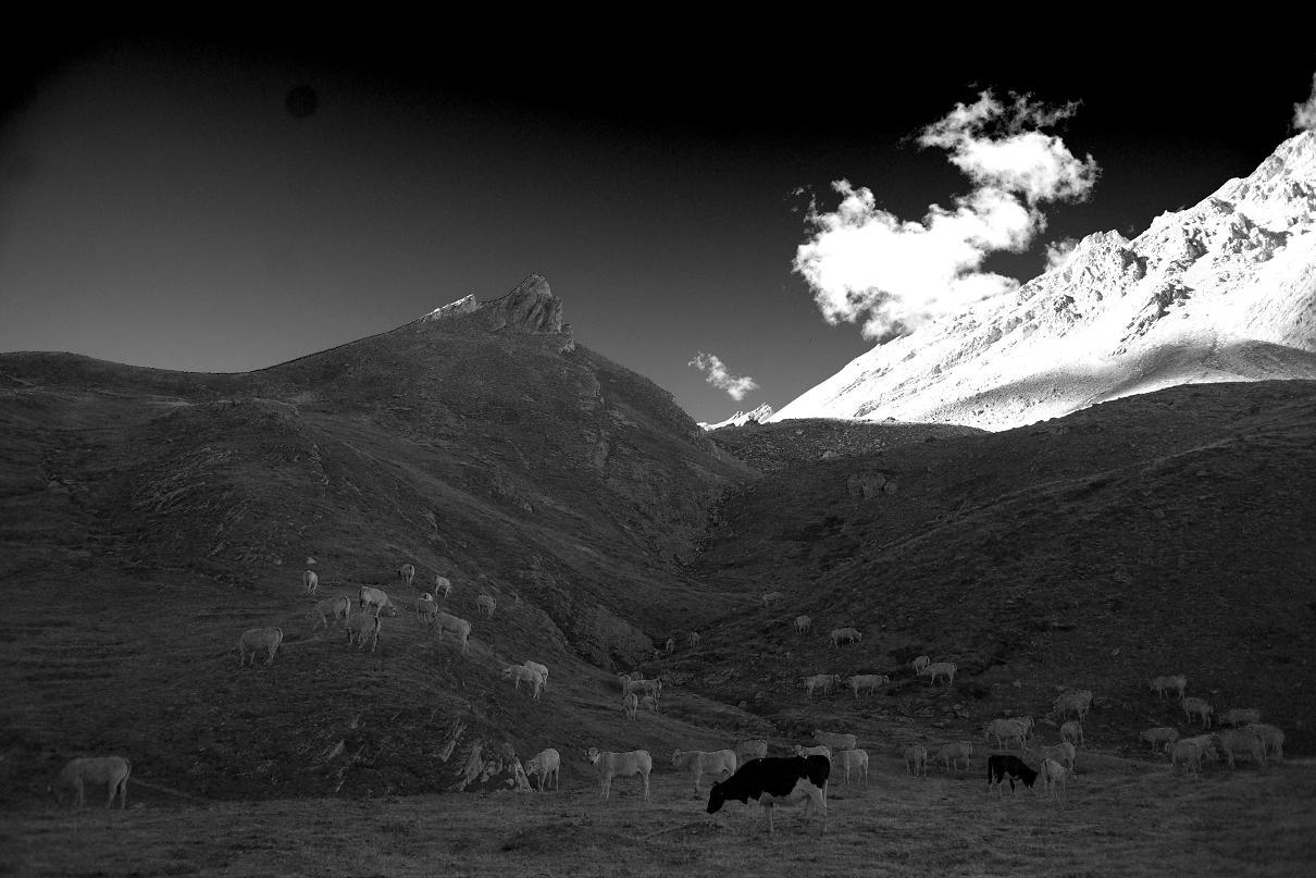 """фото """"dreamy evening"""" метки: пейзаж, горы"""