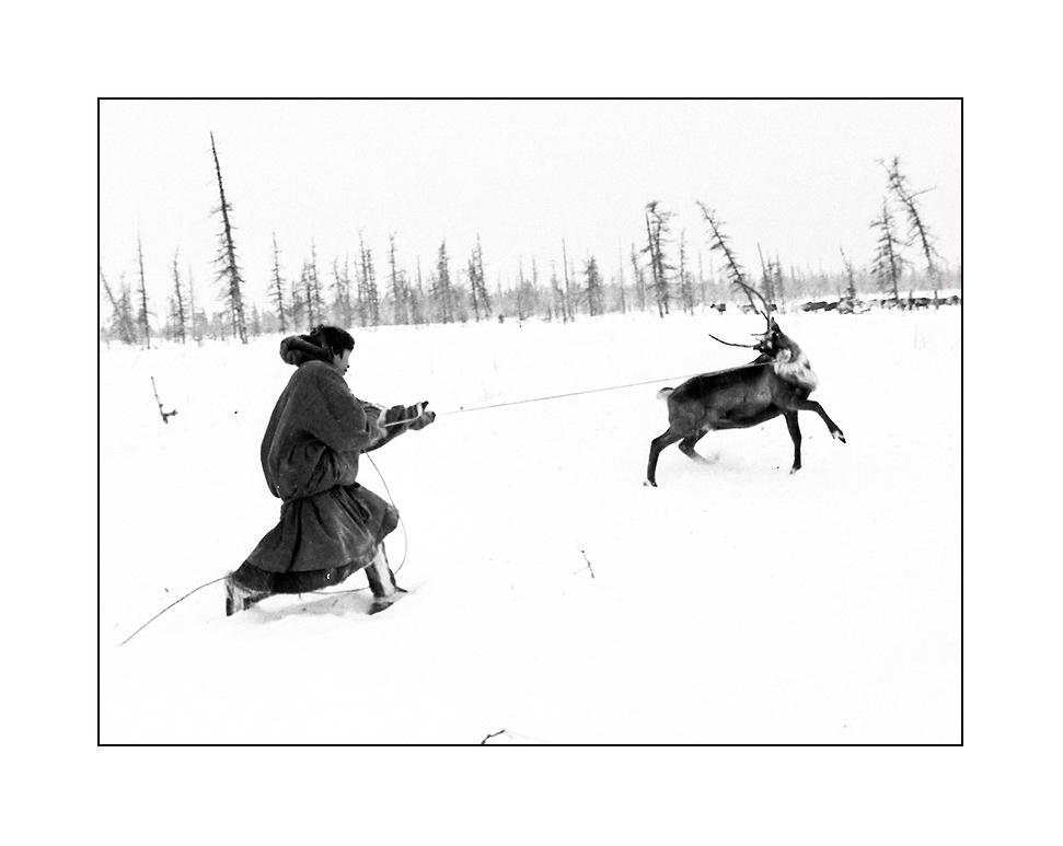 """фото """"Догнать оленя"""" метки: жанр, черно-белые,"""