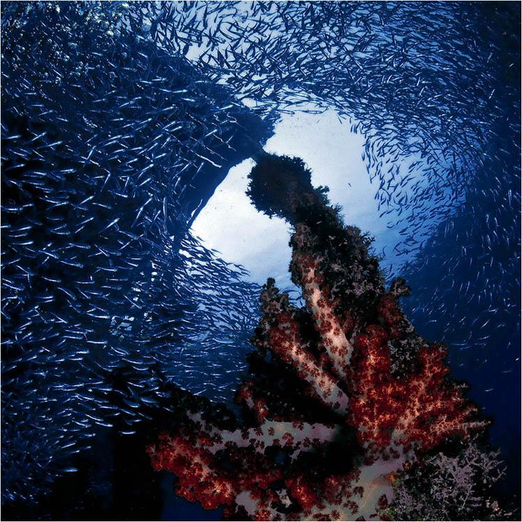 """фото """"Рыбьи ясли"""" метки: путешествия, подводные, Азия"""