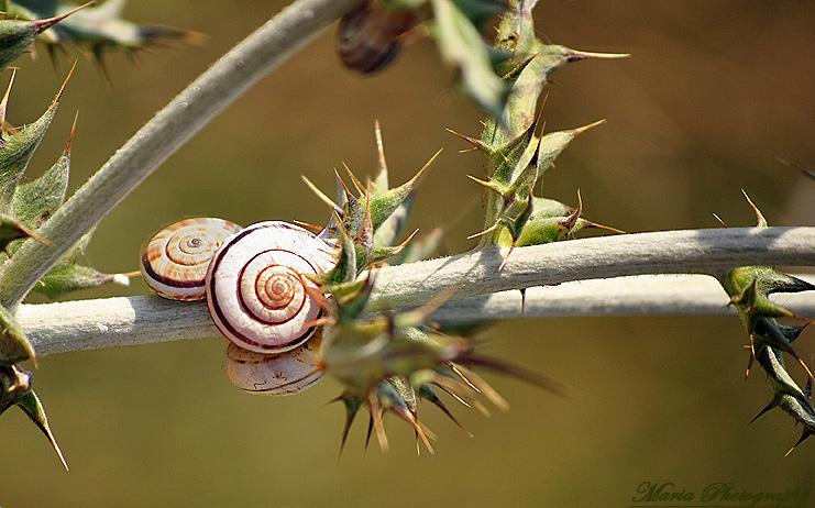 """фото """"Snails"""" метки: природа, насекомое"""
