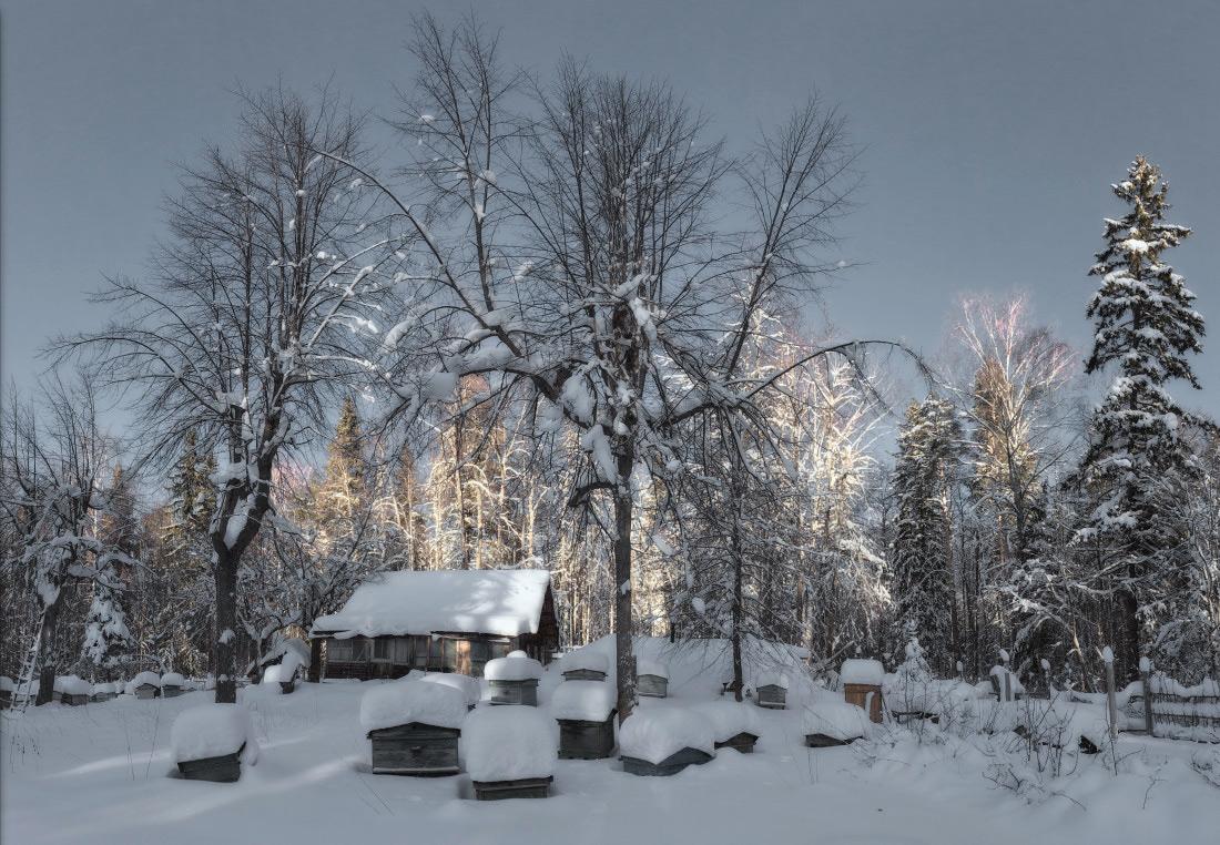 """фото """"Вечернее солнце"""" метки: пейзаж, панорама, зима"""