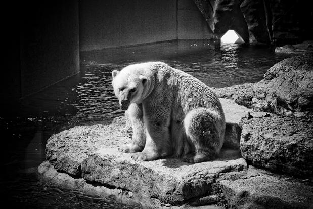 """фото """"***"""" метки: природа, черно-белые, дикие животные"""
