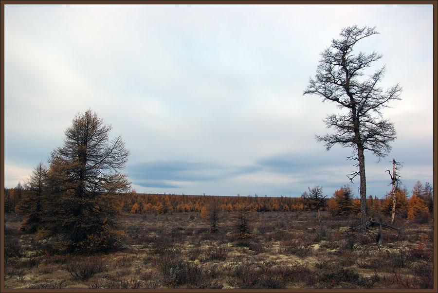 """фото """"Последние дни осени"""" метки: пейзаж, лес, осень"""