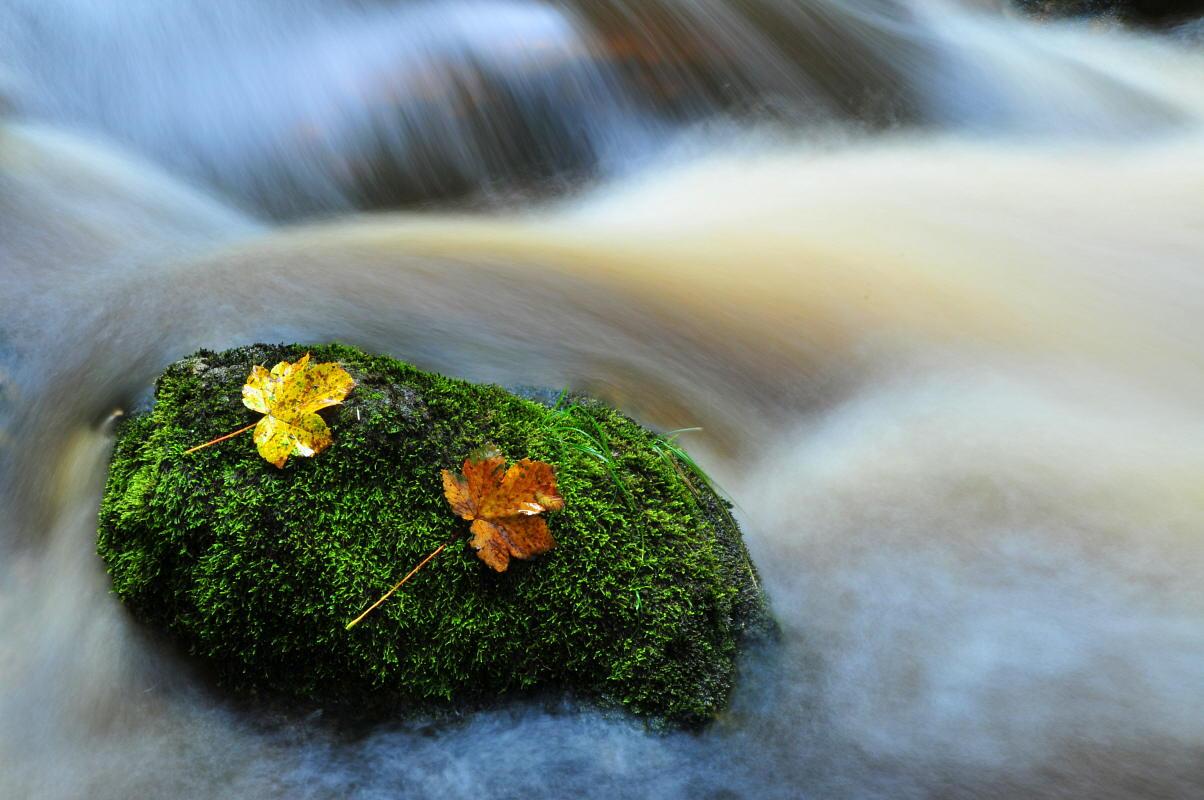 """фото """"water"""" метки: пейзаж, вода, осень"""