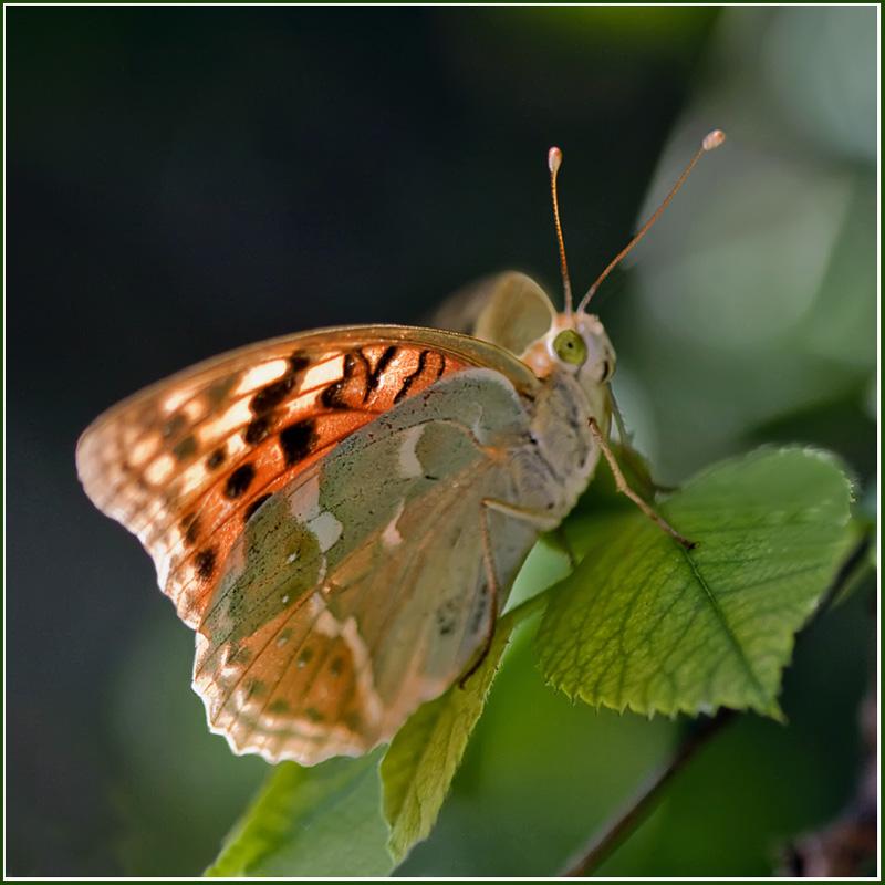 """фото """"Поговорим?"""" метки: природа, макро и крупный план, насекомое"""