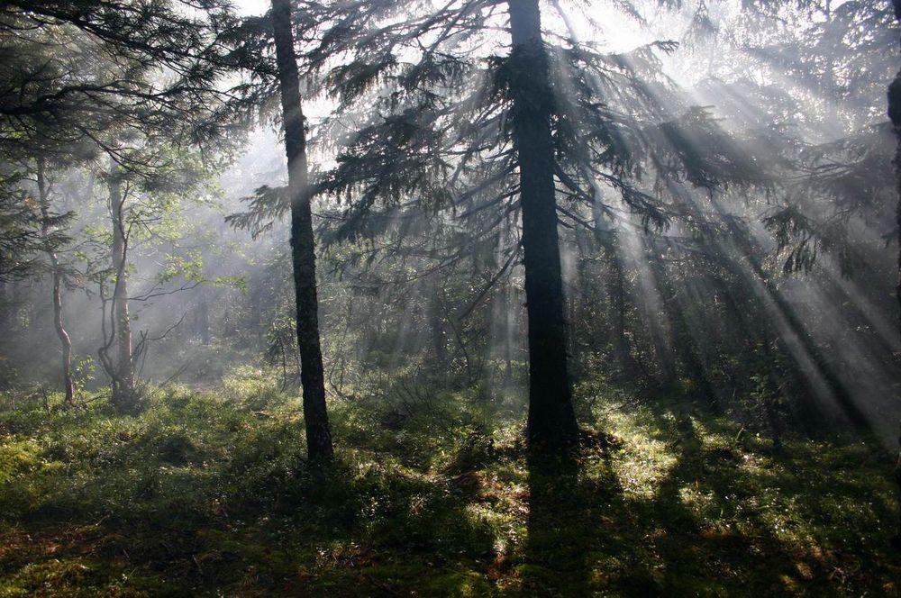 "фото ""о вечном"" метки: пейзаж, лес"