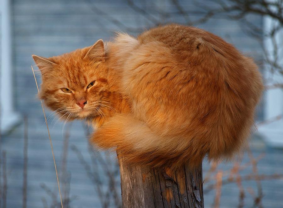 "фото ""Red"" метки: природа, домашние животные"
