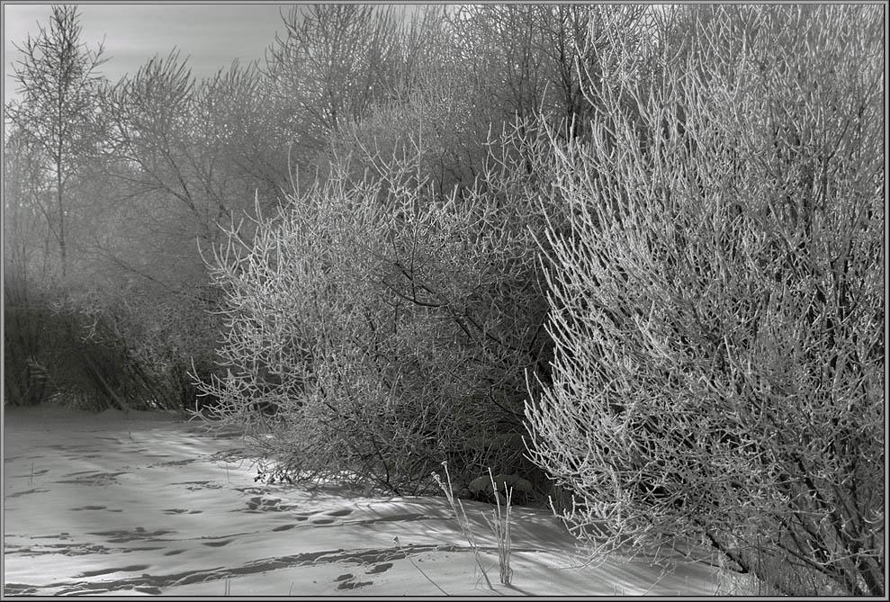 """фото """"Уныние"""" метки: пейзаж, зима"""
