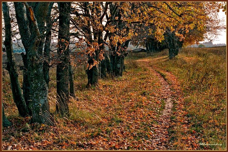 """фото """"Запах осени"""" метки: пейзаж, лес"""