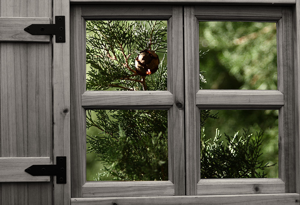 "фото ""The window"" метки: природа, фотомонтаж, цветы"