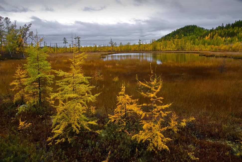 """фото """"Хмурое утро..."""" метки: пейзаж, лес, осень"""
