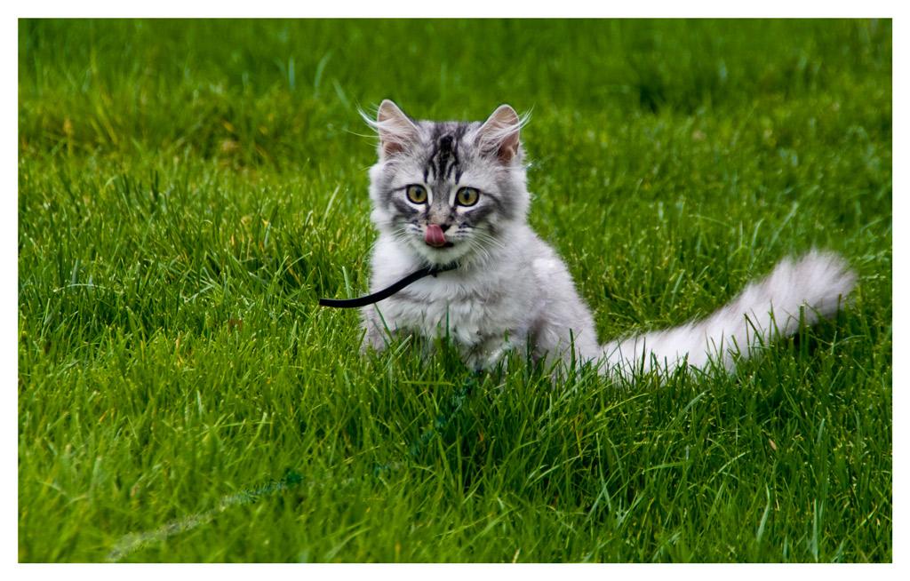 """фото """"такой вот язык у меня"""" метки: природа, домашние животные"""