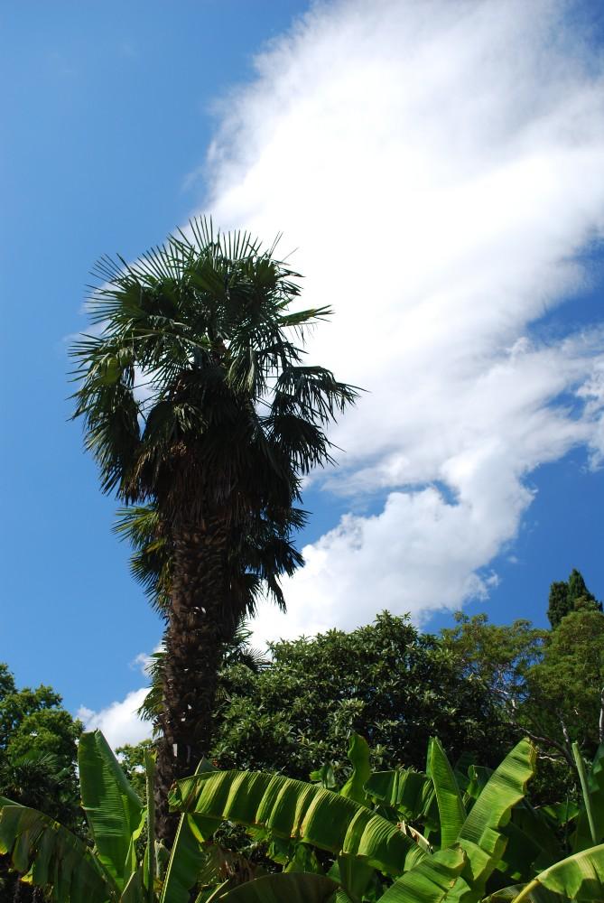 "фото ""Пальма"" метки: пейзаж, путешествия, Европа, осень"