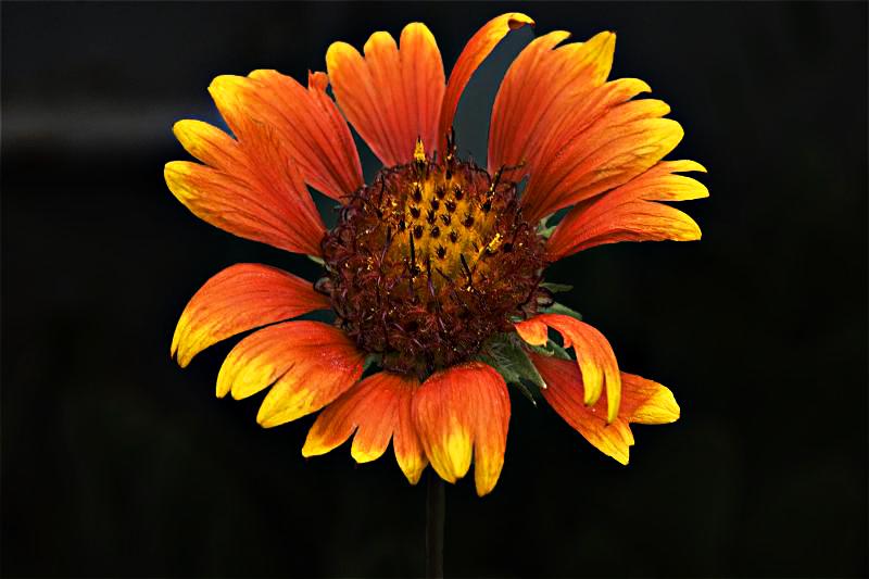 """фото """"Цветочная 99."""" метки: природа, цветы"""