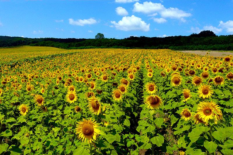 "фото ""Colours of summer / Цвета лета"" метки: пейзаж, природа, лето, цветы"