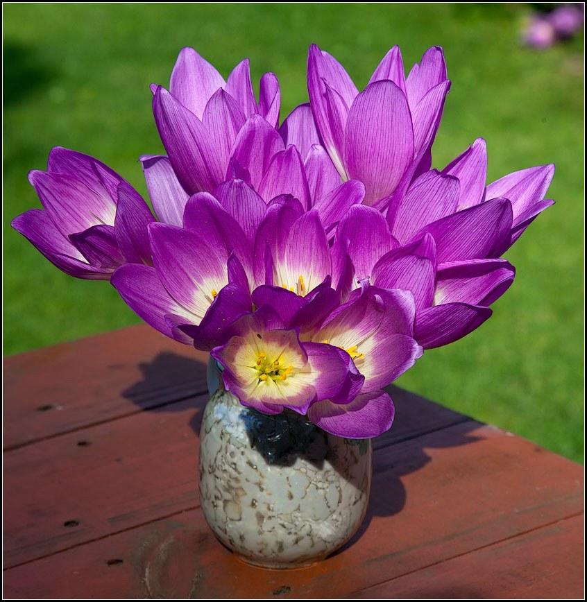 """фото """"цветы осени"""" метки: натюрморт, природа, цветы"""