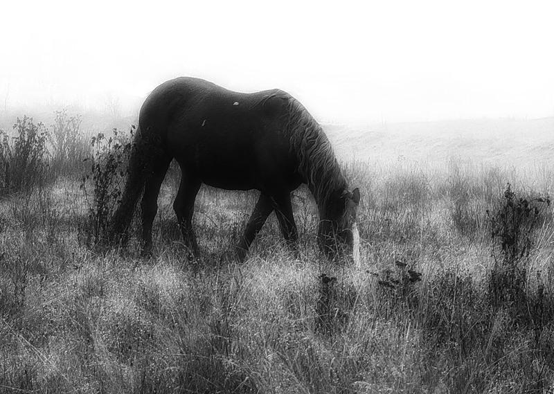 """фото """"Лошадь в тумане"""" метки: черно-белые,"""