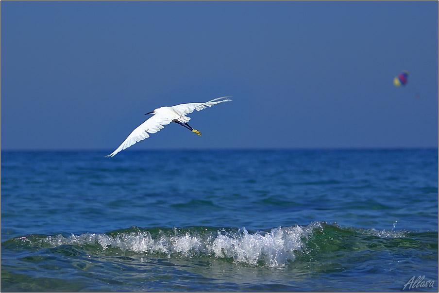 """фото """"Какое счастье - крылья ощущать!"""" метки: пейзаж, природа, вода, дикие животные"""