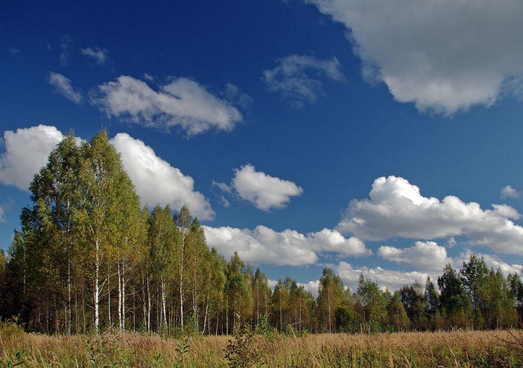 """фото """"Осенний день"""" метки: пейзаж, осень"""