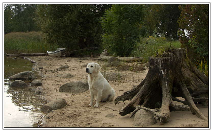 "фото ""Про реку, лодку и собаку."" метки: природа, домашние животные"