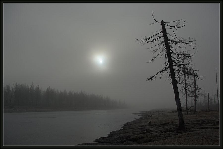"""фото """"Звезда по имени Солнце"""" метки: пейзаж, лес, осень"""
