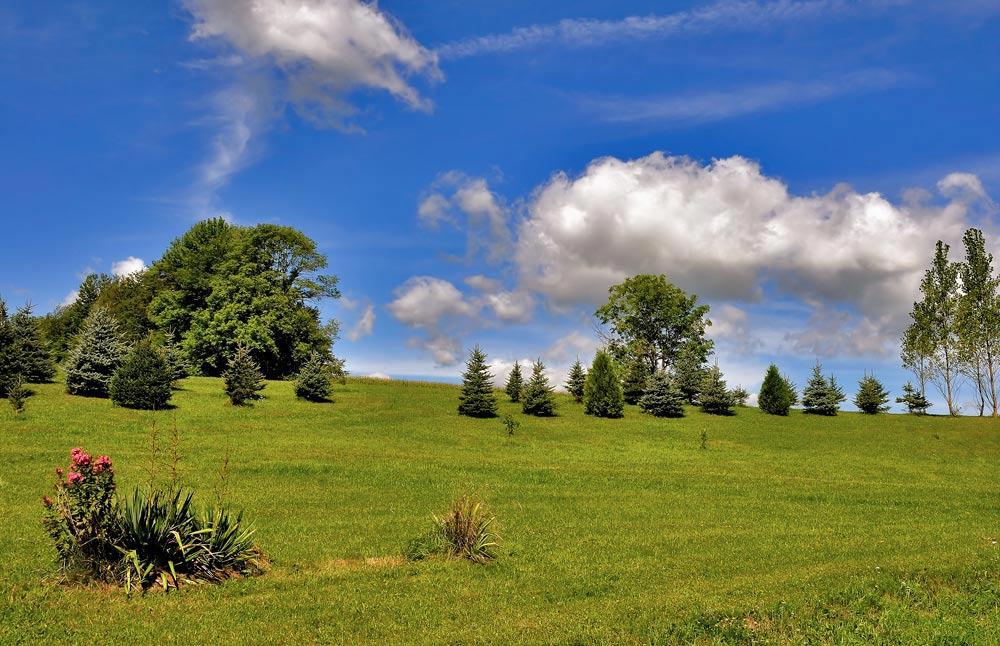 """фото """"На солнечной поляночке....."""" метки: пейзаж, лето"""