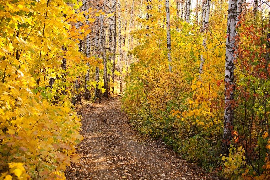 """фото """"Осень фото"""" метки: пейзаж, лес, осень"""
