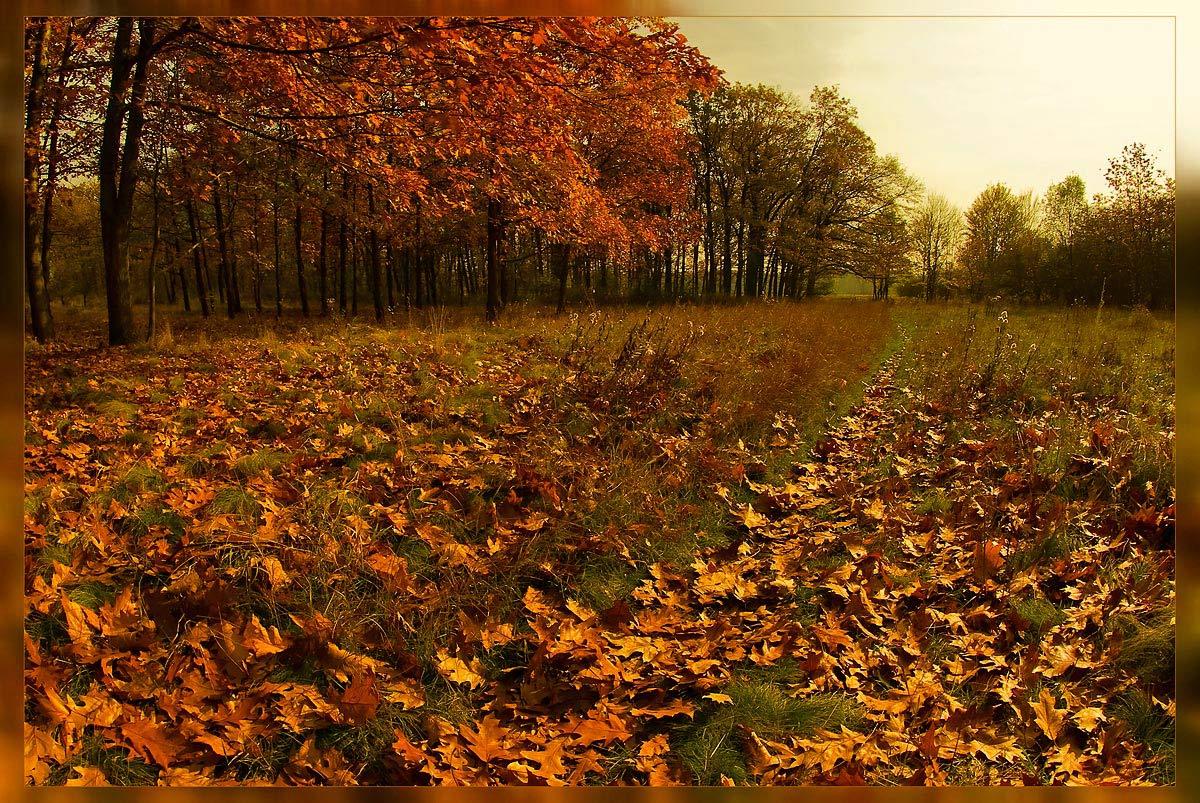 "фото ""Золото осени"" метки: пейзаж, осень"