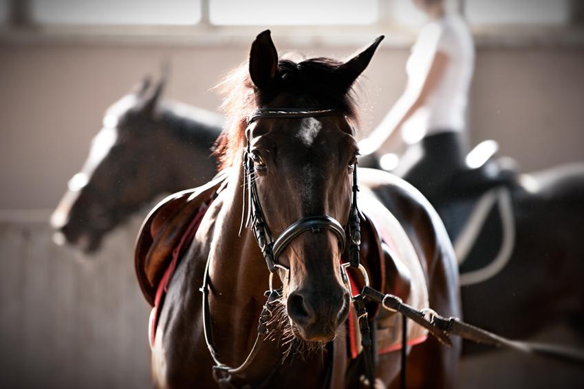 """фото """"Прокатный конь"""" метки: природа, жанр,"""