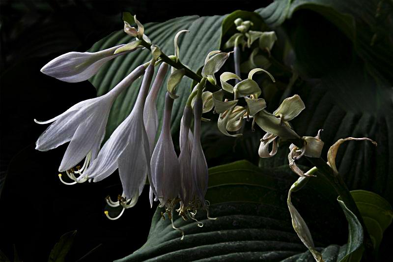 """фото """"Цветочная 101."""" метки: природа, цветы"""