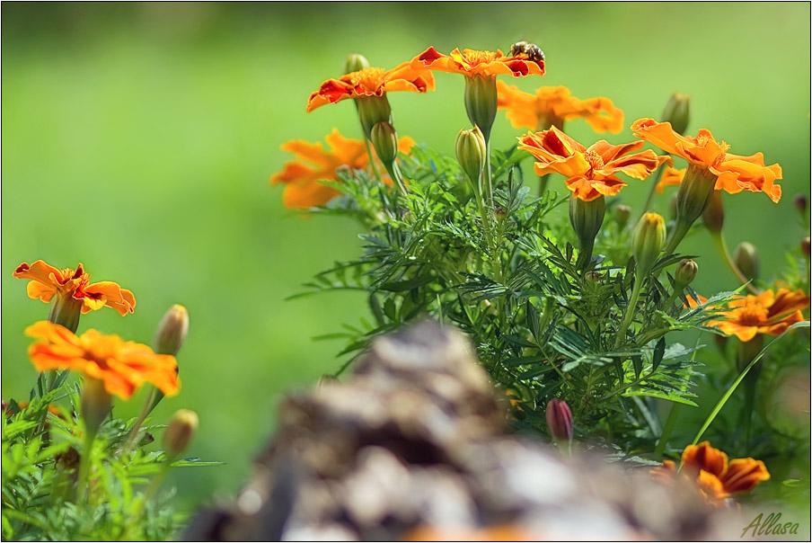 """фото """"Ласковая осень"""" метки: природа, насекомое, цветы"""