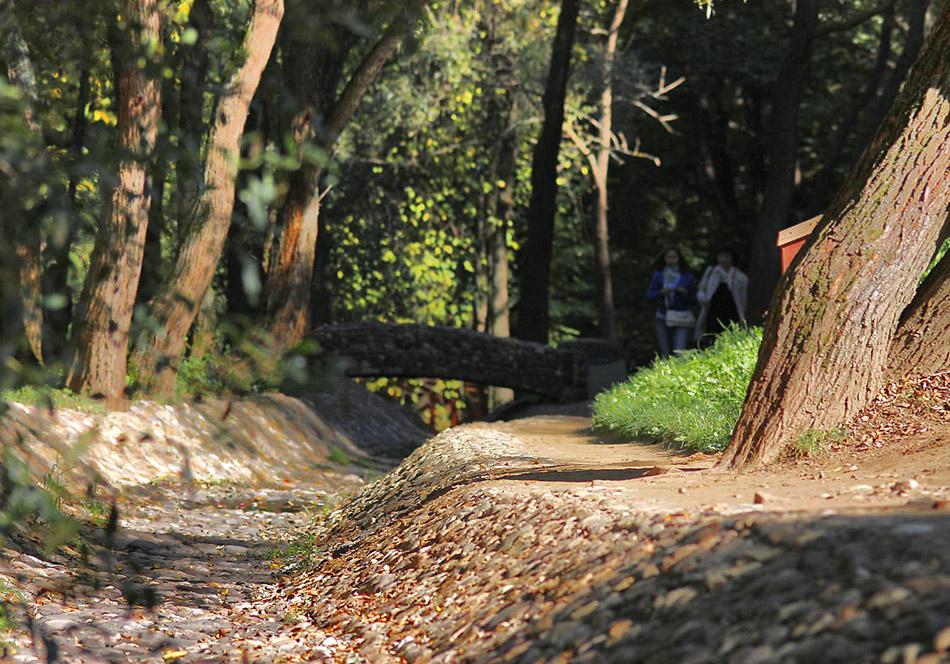 "фото ""Русло ручья"" метки: пейзаж, лес, осень"