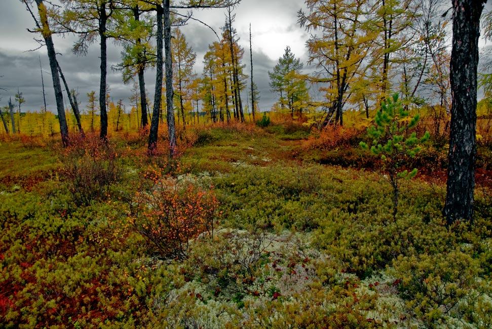 """фото """"Осень в тайге"""" метки: пейзаж, лес, осень"""