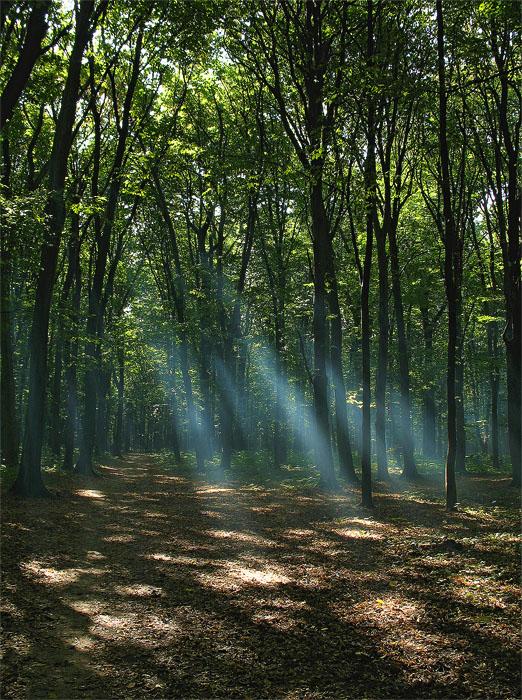 "фото ""Smoke in the forest"" метки: пейзаж, лес, осень"