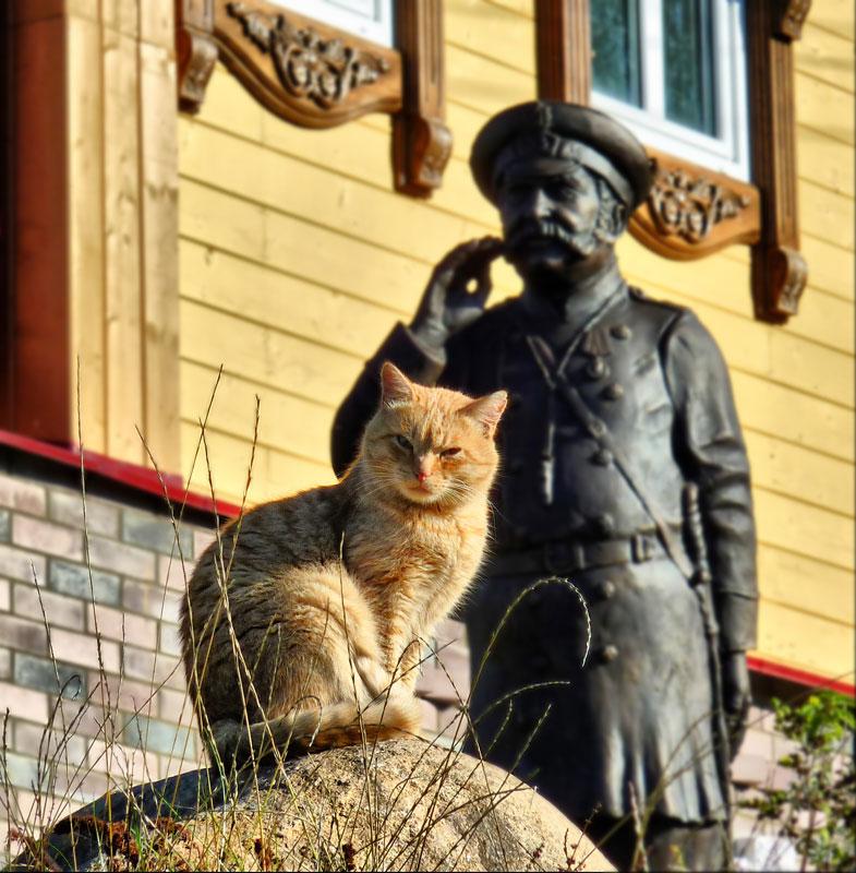 """фото """"Наблюдатель"""" метки: природа, домашние животные"""