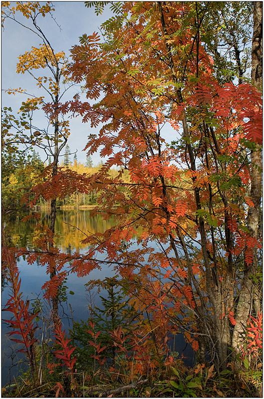 """фото """"Цвета осени"""" метки: пейзаж, лес, осень"""