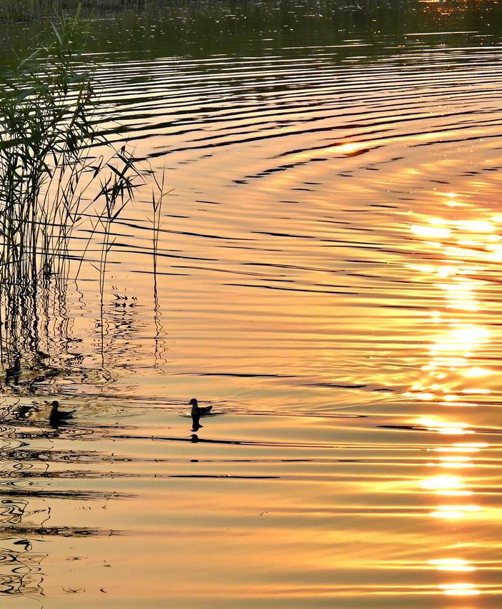 """фото """"Безмятежность"""" метки: пейзаж, закат"""