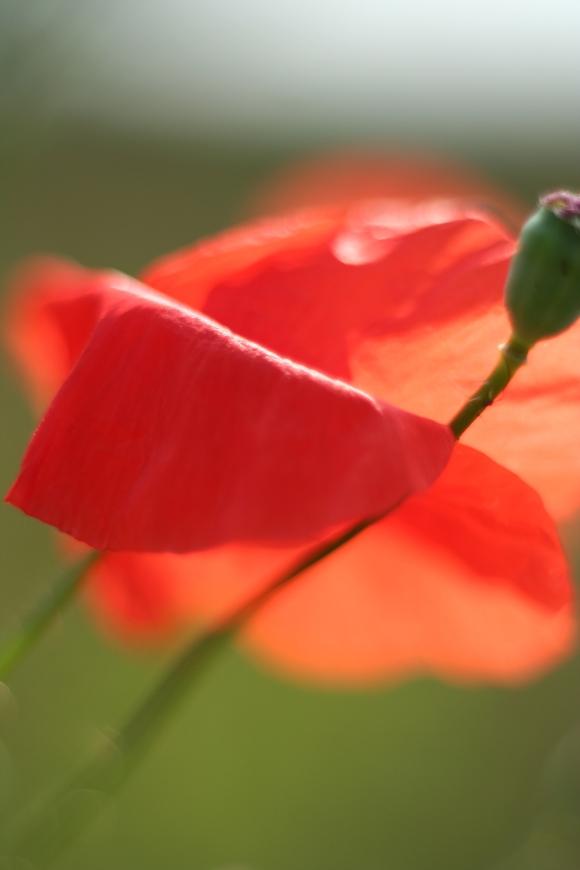 """фото """"Embrace"""" метки: природа, макро и крупный план, цветы"""