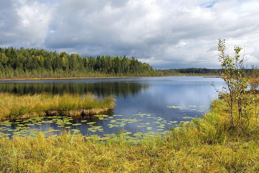 """фото """"Озерко на торфяннике"""" метки: пейзаж, осень"""