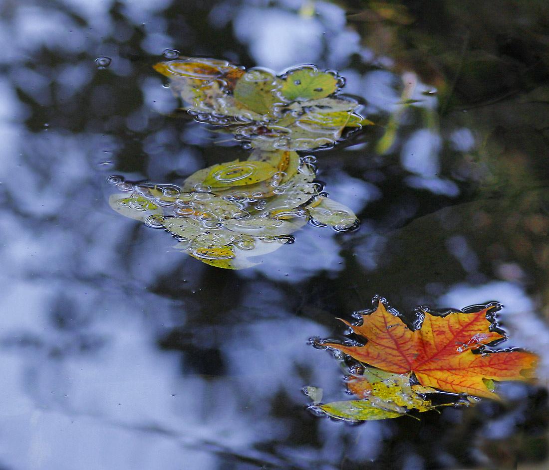 Картинки розы, картинки с прощай осень