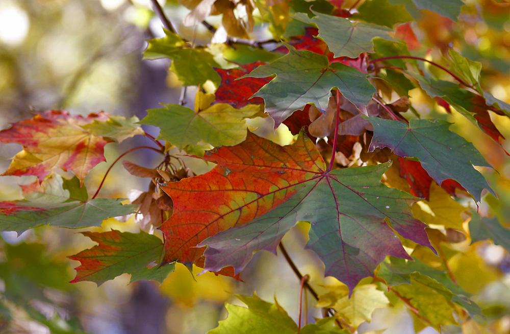 """photo """"Beautiful autumn farewell."""" tags: landscape, autumn"""
